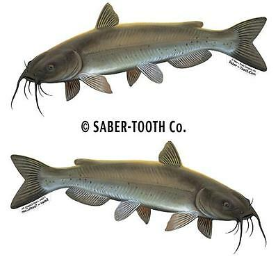 "CHANNEL CATFISH set of two fish decals/stickers 7.25"" x 2.5"""