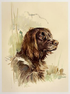 Vintage GERMAN SPANIEL Dog Print Gallery Wall Art German Spaniel Illustration