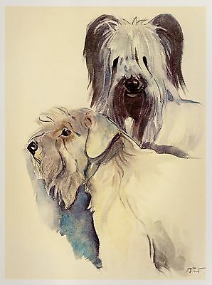 Vintage SKYE & SEALYHAM TERRIER Dog Print Gallery Wall Art Terrier Illustration