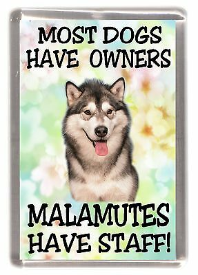 """Alaskan Malamute Dog Fridge Magnet """"Most Dogs Have Owners Malamutes Have Staff"""""""