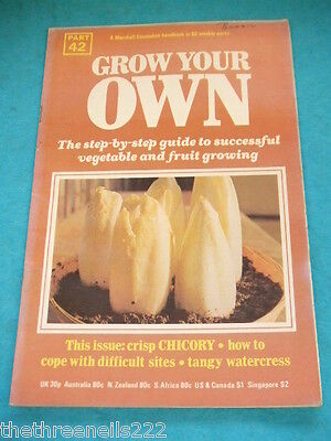 Grow Your Own #42 - Chicory