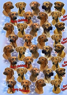 Rhodesian Ridgeback Dog Christmas Wrapping Paper By Starprint