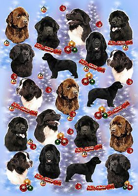 Newfoundland Dog Christmas Wrapping Paper By Starprint - Auto Combined Postage