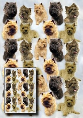 Cairn Terrier Gift Wrapping Paper By Starprint