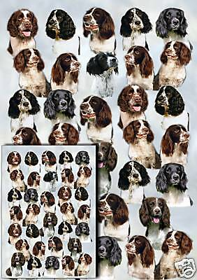 English Springer Gift Wrapping Paper By Starprint