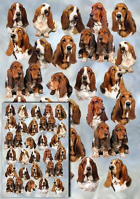 Basset Hound Dog Gift Wrapping Paper By Starprint