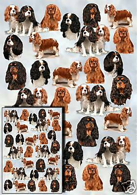 Cavalier King Charles Gift Wrapping Paper By Starprint