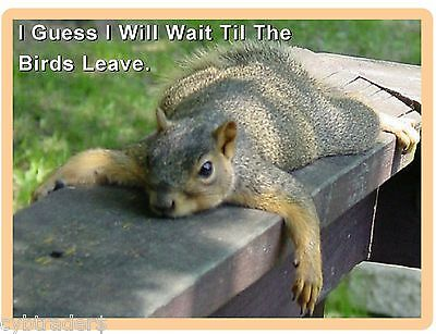 Funny Squirrel Lazy Wait  Refrigerator / Tool Box Magnet Gift Card Insert