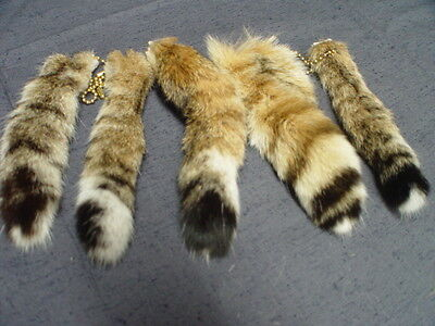 Genuine Bobcat Tail on Key Chain (CHOOSE SIZE) Purse Accessory  Authentic Fur