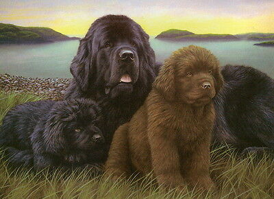 Nigel Hemming NEWFOUNDLANDS Newf Newfies Working Dogs Art Litter Puppies Pups