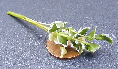 1:12 Scale Single Green & White Plant Dolls House Miniature Flower Garden P25