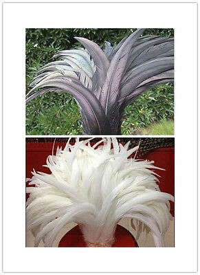 Wholesale 10/50/100 pcs black / white rooster tail feathers 10-16 inch /25-40 cm