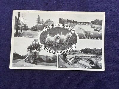 Old Postcard A Double Scotch Musselburgh