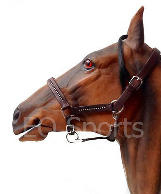 BLING! Padded Leather Diamonte/Diamante Headcollar Red Detail /Halter Full Brown