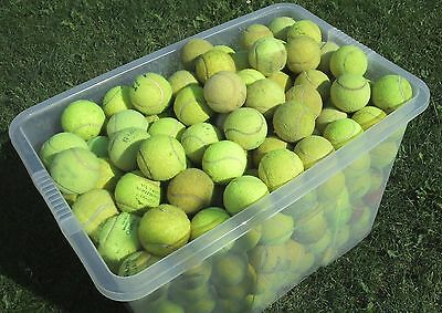 Used Tennis Balls - Ideal Dog Toys/Chews/Cricket 4, 6, 15, 20, 30, 50 or 60
