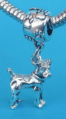 Adorable Rat Terrier 3D Dangle Charm on Pawprint Bail