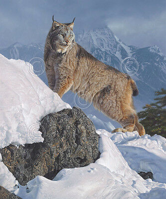 WILDLIFE ART PRINT Austere Ascent (Lynx) by Daniel Smith Cougar Cat Poster 42x50
