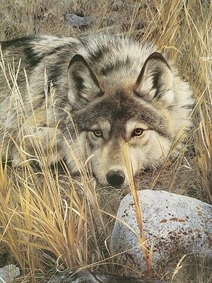 WOLF ART PRINT One to One (detail) by Carl Brenders Wildlife Wolves Poster 13x19
