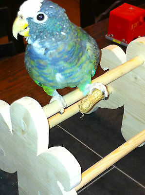 Parrot Play Perch Stand table top for small parrots Starvin Marvin Designs
