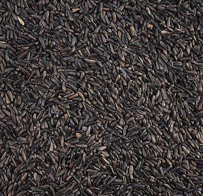 12.55Kg Maltby's Wild Bird Niger Nyjer Seed (Lower Per Kg Than 12.5Kg And 10Kg )