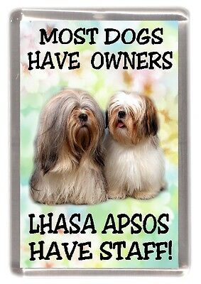 "Lhasa Apso Dog Fridge Magnet (1) ""Most Dogs Have Owners Lhasa Apsos Have Staff"""