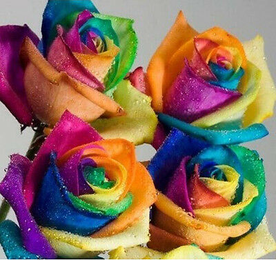 New Charms 200pcs Rare Holland Rainbow Rose Flower Seed Home Garden Plants Decor