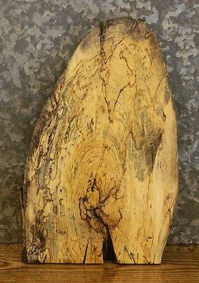 Salvaged Live Edge Hackberry Craftwood/Taxidermy Mount Slab 13424