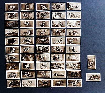 Hill Zoological Series 1924 -  very clean set plus error card