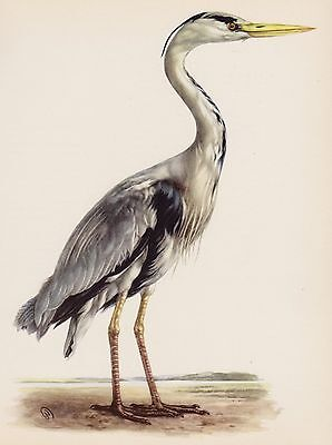 Lovely Vintage HERON Print BIRD Print Vintage Bird Illustration  #1330