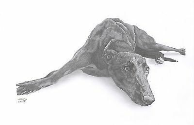 LURCHER GREYHOUND (11) dog Limited Edition art drawing print signed by UK artist