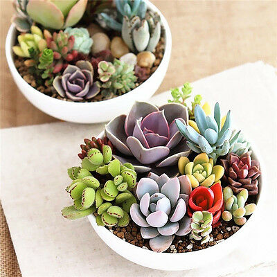 100PCS Seed Mixed Succulents Seeds Rare Succulent Potted Plant Home Garden Decor