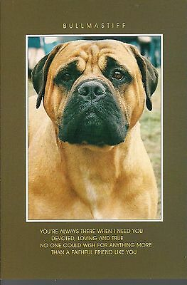 Bullmastiff Photo Card  Postcard Size  with a Verse