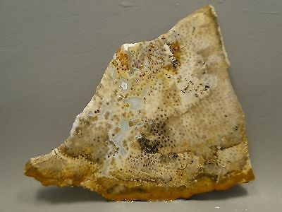 Petrified Palm Wood Rough Rock Stone Slab Fossil Cabbing Indonesia #8