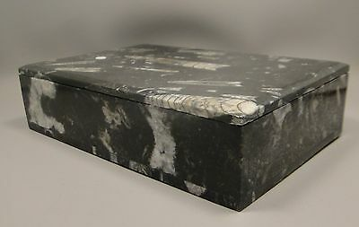 Orthoceras Fossil Stone Box 8 inch Jewelry Box Natural Gemstone Morocco #2