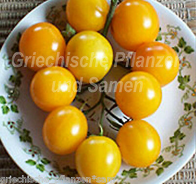Cocktail-Tomate gelb yellow Partytomate Tomaten 10 Seeds