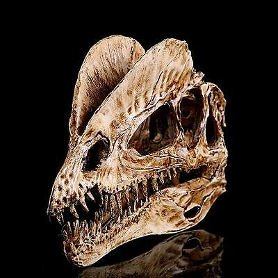 1/3 Scale Dinosaur Dilophosaurus Resin Fossil Skull Model Collectibles White