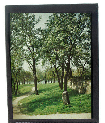 """Autochrome 9x12cm """"flowering trees""""  1912 good condition A10"""