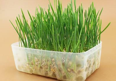 100% Natural Trixie Grow your Own Cat Kittens Pets Soft Grass Including Tray