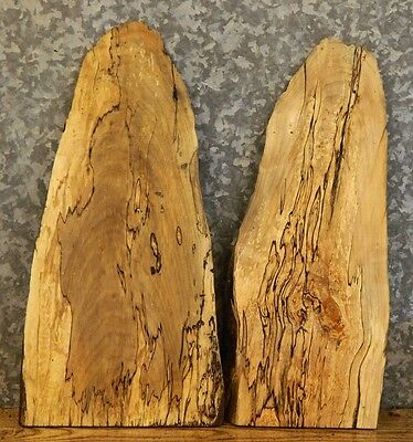 2- Very Rustic Live Edge Spalted Maple Taxider Base Slabs 13161-13162