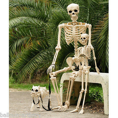 Halloween Poseable Full Life Size Skeleton Party Prop Decoration Human Animals