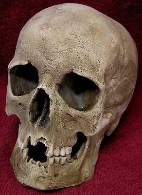 Nemesis Now LIFE SIZE FREESTONE Replica MALE GOTHIC HUMAN SKULL SCULPTURE