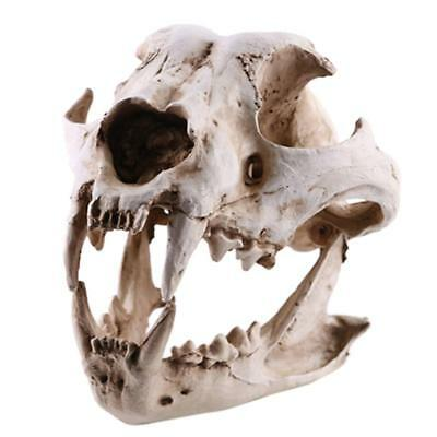 Realistic Dog Canine Skull Model Resin Skeleton Medical Teaching Figurine