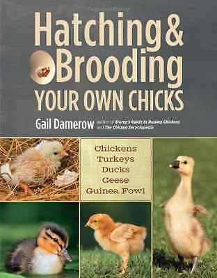 Hatching & Brooding Your Own Chicks - Paperback NEW Gail 2013-02-15