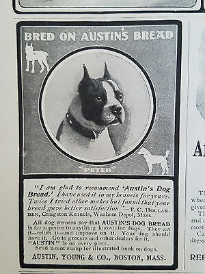 1901 Vintage Austin Young & Co Boston Terrier Dog Bread Peter Original Ad