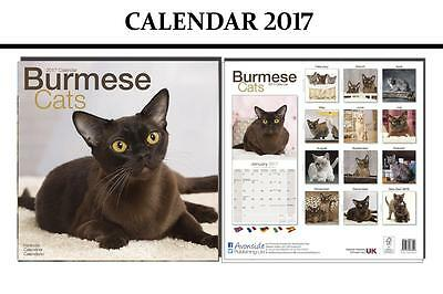 Burmese Cats 2017 Square Calendar - Brand New And Sealed By Avonside