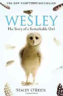 Wesley: The Remarkable Story of an Owl - Paperback NEW O'Brien, Stacey 16 Jul 20