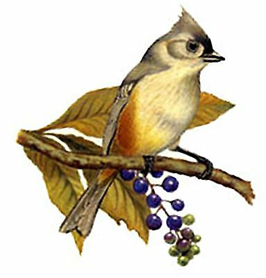 "1 Titmouse Bird 5-1/2"" Waterslide Ceramic Decal Tx"