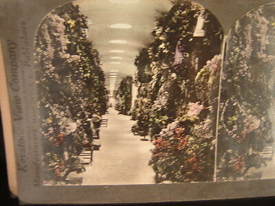 Stereoviews 12 antique photographs garden scenes 1800's flowers farming plants