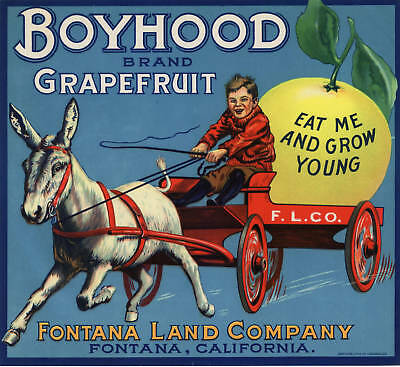 Boyhood Crate Label Vintage Advertising Fontana Donkey Orange Grapefruit 1930S