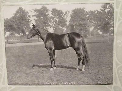 King of His Class B&W Portrait of Beautiful Horse 1904 R Hill Calendar Sample